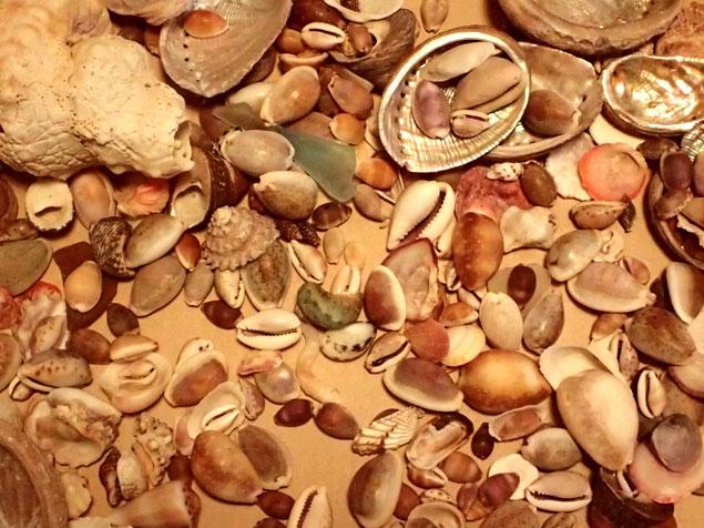 ビーチコーミングで拾った貝殻