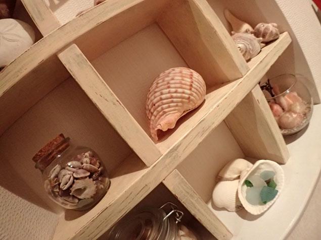 我が家に飾ってある貝殻