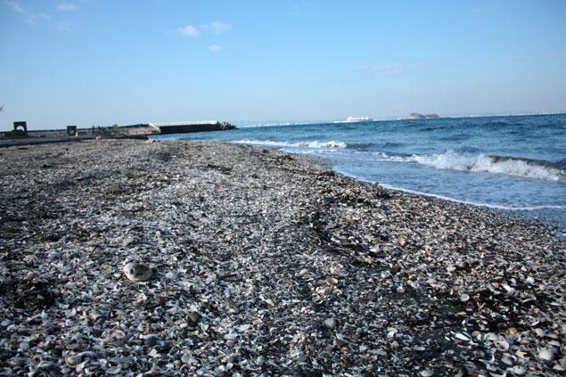 富津岬でのビーチコーミング