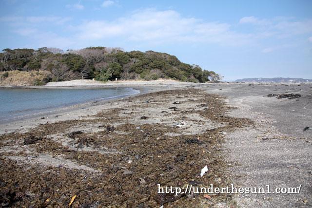 沖ノ島でワカメ拾い