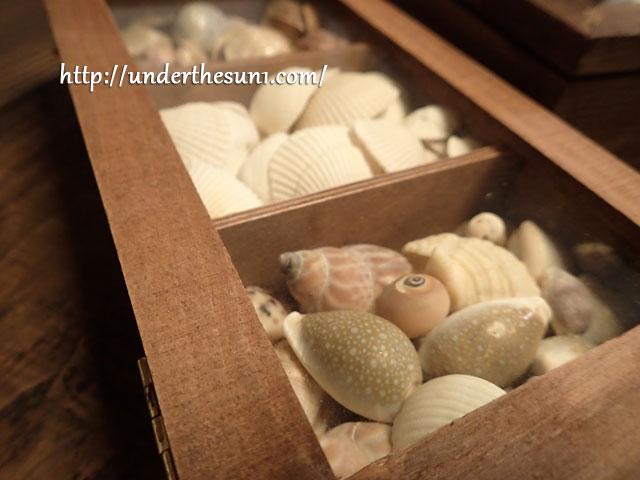 奥さんが買ってきた貝殻用の木箱