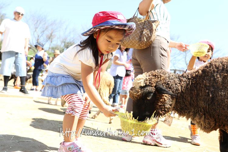 成田ゆめ牧場ヤギにエサを上げる娘